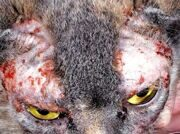 Лечение аллергии у кошек и собак.